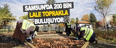 Samsun'da 200 Bin Lale Toprakla Buluşuyor