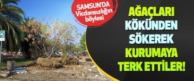Samsun'da ağaçları kökünden sökerek kurumaya terk ettiler!