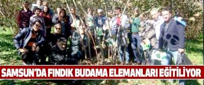 Samsun'da Fındık Budama Elemanları Eğitiliyor