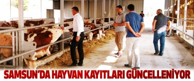 Samsun'da Hayvan Kayıtları Güncelleniyor
