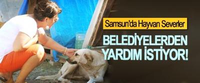 Samsun'da Hayvan Severler Belediyelerden Yardım İstiyor!