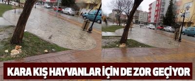 Samsun'da Kış Hayvanlar İçin De Zor Geçiyor