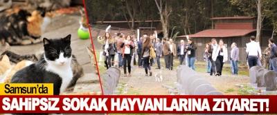 Samsun'da Sahipsiz Sokak Hayvanlarına Ziyaret!