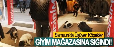 Samsun'da Üşüyen Köpekler Giyim Mağazasına Sığındı!