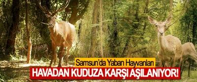 Samsun'da Yaban Hayvanları Havadan Kuduza Karşı Aşılanıyor!