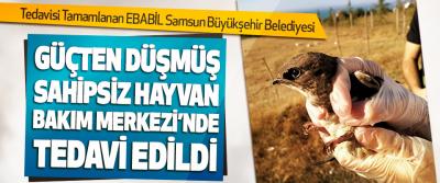 Tedavisi Tamamlanan Ebabil Samsun Büyükşehir Belediyesi Güçten Düşmüş Sahipsiz Hayvan Bakım Merkezi'nde Tedavi Edildi