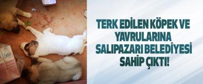 Terk Edilen Köpek Ve Yavrularına Salıpazarı Belediyesi Sahip Çıktı!
