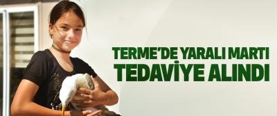 Terme'de Yaralı Martı Tedaviye Alındı