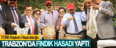 TOBB Başkanı Hisarcıklıoğlu Trabzon'da Fındık Hasadı Yaptı