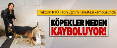 Trabzon KTÜ Fatih Eğitim Fakültesi kampüsünde Köpekler neden kayboluyor!