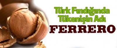 Türk Fındığında Tükenişin Adı Ferrero