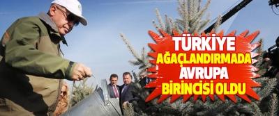 Türkiye Ağaçlandırmada Avrupa Birincisi Oldu